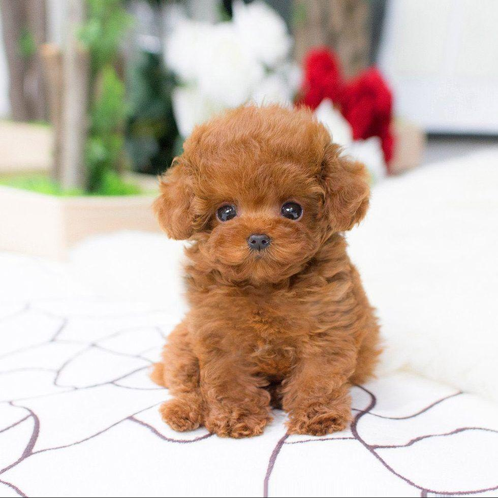 Realistischer Teddy Realistischer Hund Lucky Puppy Cute NIce Lifelike New