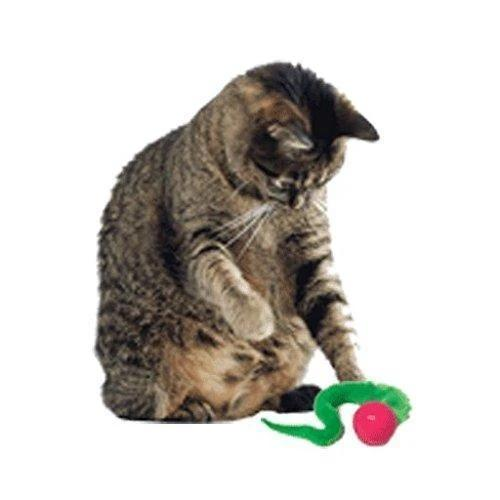2020 Newest Wiggly Ping Cat Toy