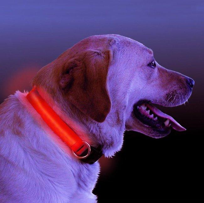 LED Light Up Dog Collar