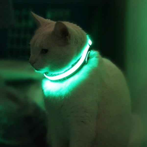 HALO MINI Illuminated Pet Collar