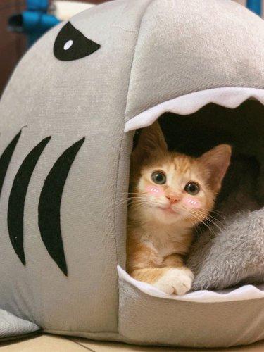 Shark Attack Pet Bed