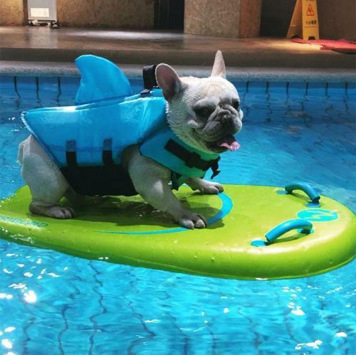 Shark Doggie Swim Vest Dog Safety Life Jacket Gift for Pets Dogs Worldwide Free Shipping
