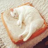 Toast Cat Pad Pet Mat Cat Dog Bed Washable Cushion Sofa Pillow