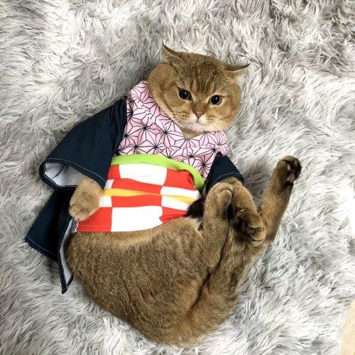 Cartoon Pet Dog Cat Clothes Demon Slayer Cosplay Kimetsu no Yaiba Kamado Tanjirou Kimono Bathrobe for Pet Cat French Bulldog