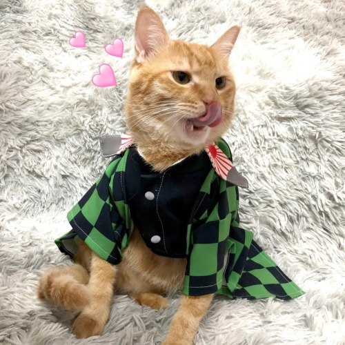 Anime Demon Slayer Kimetsu No Yaiba Cats Kamado Tanjirou Cosplay Cape Costumes Full Sets Agatsuma Zenitsu Orange Cape Suits