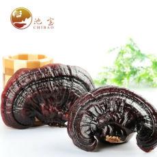 Dried Wild Lingzhi Purple Ganoderma Lucidum Herbal Organic Reishi Mushroom 500g