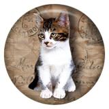 20MM cat Pintado de esmalte de metal C5288 print broches de joyería