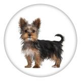 20MM perro Pintado esmalte metal C5348 estampado broches joyería