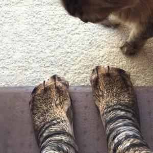 3D printing animal feet and feet socks adult Unisex Adult adult Unisex Adult Animal socks animal socks cat socks dog socks