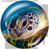 Стеклянные кнопки с принтом морской черепахи Beach Ocean 20MM