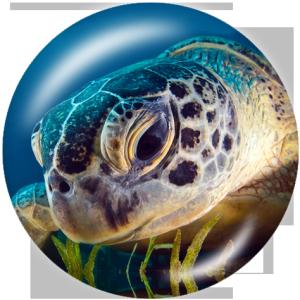 Стеклянные кнопки с принтом морской черепахи 20 мм