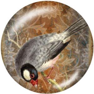 Botones a presión de vidrio con estampado de pájaro de 20 mm