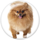 20MM dog Print glass snaps buttons