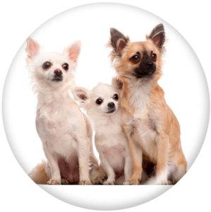 Botones a presión de vidrio con estampado de perro de 20 mm