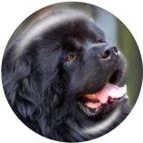 20MM Hund Drucken Sie die Druckknöpfe aus Glas
