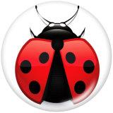 20MM Ladybug Print glass snaps buttons