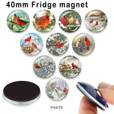 10 Stück / Los Vogelglas-Bilddruckprodukte in verschiedenen Größen Kühlschrankmagnet Cabochon