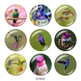Boutons-pression en verre à imprimé colibri 20MM