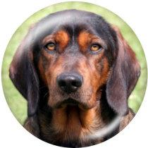 20MM Dog Print Glasschnappknöpfe