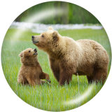 20MM   The bear   Print   glass  snaps buttons