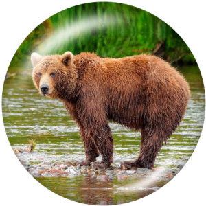 20MM Das Bärendruckglas lässt die Knöpfe einrasten