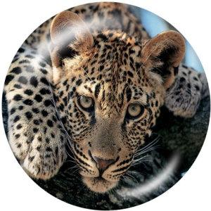 20MM Leopard Tiger Print Glasknöpfe