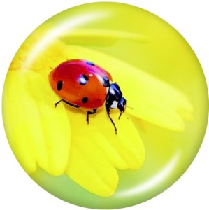 20MM  insect  Print   glass  snaps buttons
