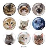 Boutons pression 20 mm en métal peint Imprimé chat
