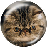 Painted metal 20mm snap buttons   Cat   Print