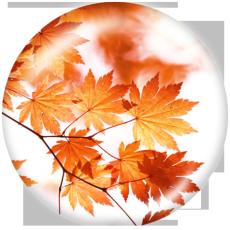 Окрашенный металл 20мм кнопки кленовые листья Печать