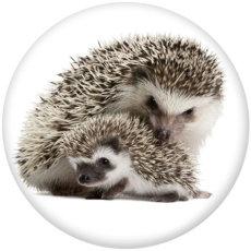 Painted metal 20mm snap buttons  hedgehog Print