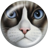 Boutons pression 20 mm en métal peint chat Imprimer