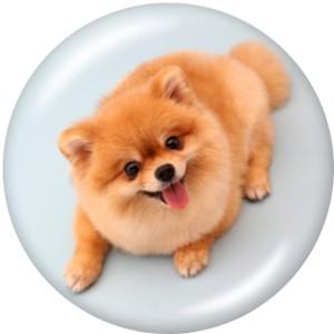 20MM犬かわいい豚プリントガラススナップボタン