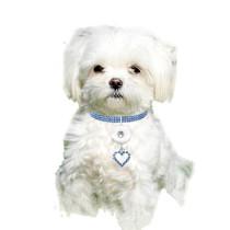 Новые товары для домашних животных, эластичные аксессуары для кошек и собак, ошейники для домашних животных подходят для 1, 18 и 20 мм.