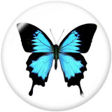 Boutons pressions en verre Dragonfly Butterfly Love Print 20MM