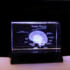 Brain Structure Cut Etched Crystal Glass