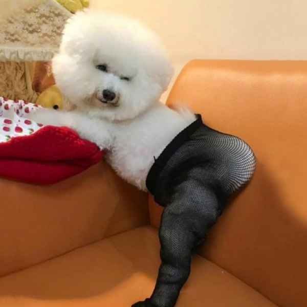 Funny Mesh Socks For Pet Dog Clothes For Small Medium Dogs Mesh Elastic Stockings Sexy Dog Costume Photograph Props For Samoyed