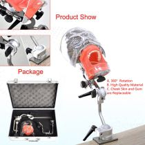 Dental phantom Head Model with new bench mount fo Teeth Model exercise Simulator