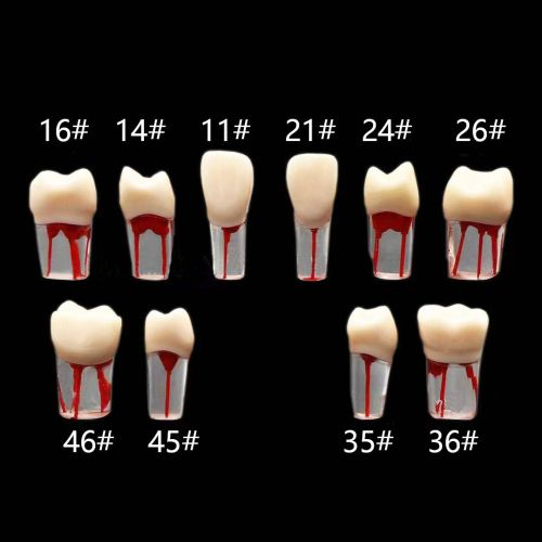 Dental Tooth Root Canal Model Dental For RCT Practice Medullary Pulp Cavity Clear Resin