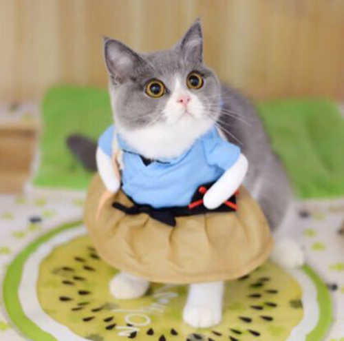 Kitten Funny Dog Cat Clothes Pet Costume Funny Feet After Surgery Wear, Professional Home Indoor Pets Clothing