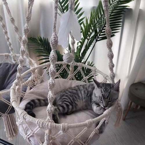 Hanging Cat