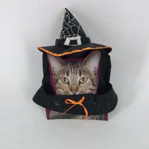 Halloween Devil and Angel Holiday Make-up Costume Feather Wings Pet Dress Up