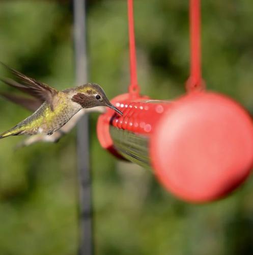 Best Hummingbird Feeder