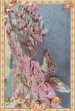 Infanta  -Windsor's afternoon tea- Three-dimensional Relief Lolita JSK + Chiffon Petticoat Set