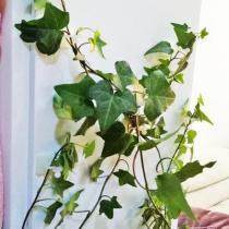 Plant climbing wall fixture