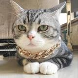Gold Chain Pets Safety Collar (Adjustable Length)