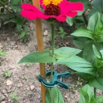 Reusable Garden Flower Lever Loop Gripper Clips