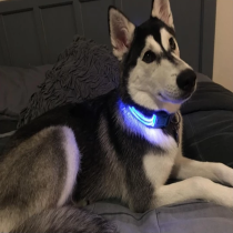 Premium Led Dog Collar