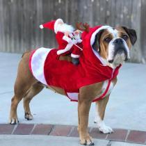 Santa Claus Dog Costume