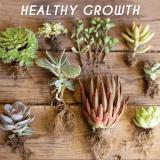 Rapid-Grow Rooting Powder (5PCS)